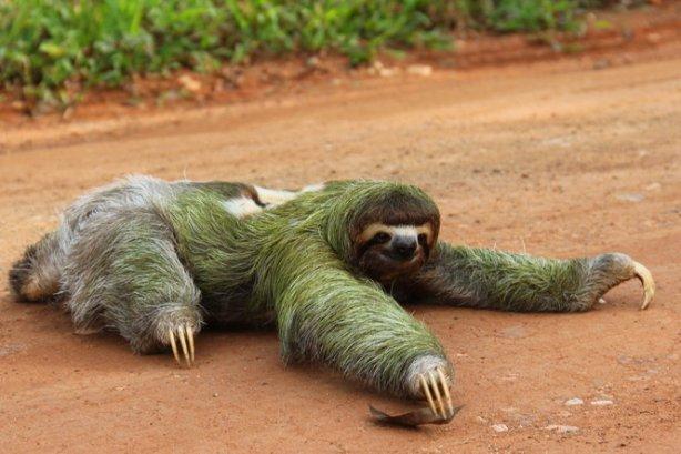 sloth road